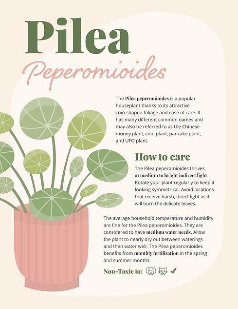 Pilea How To-01.jpg