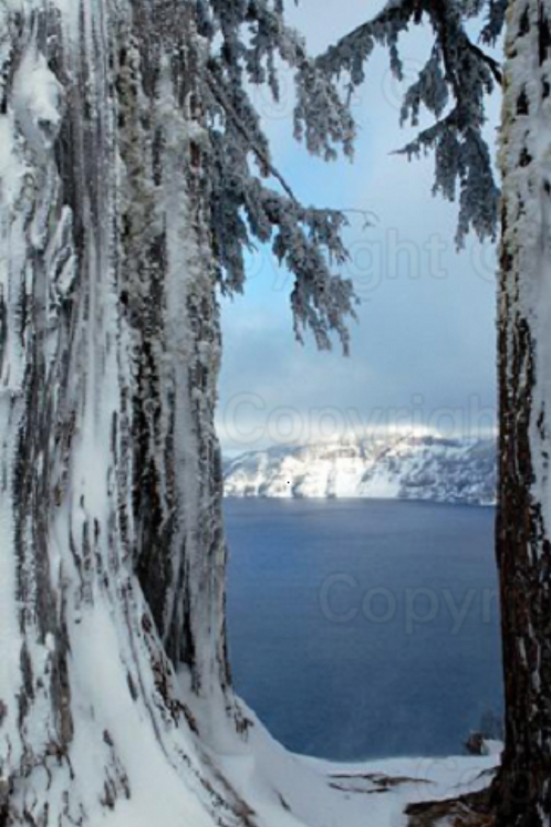 Snow Encrusted Trees at Carter Lake