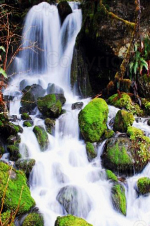 A Mossy Waterfall On The Olympic Peninsula