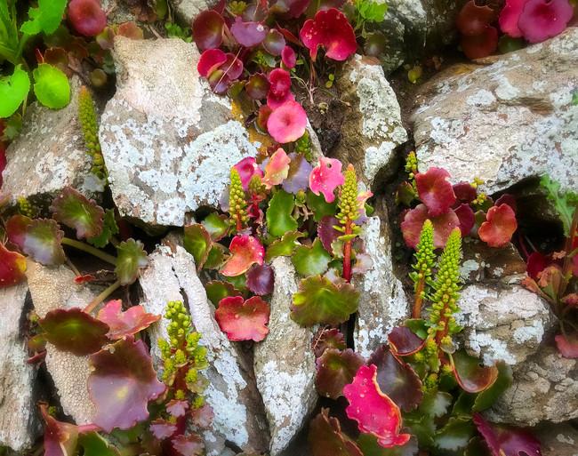 Lichen wall 2.jpg
