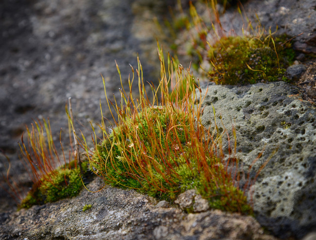stone and plants 2.jpg