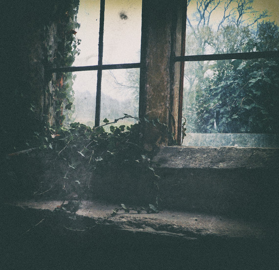 ivy window.jpg