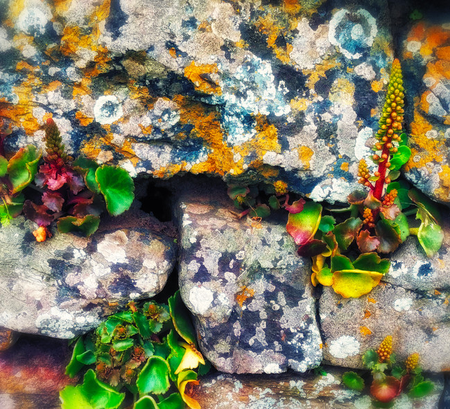 lichen wall.jpg