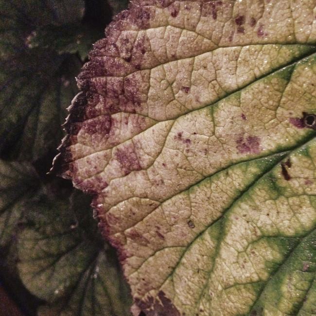 parched leaf.jpg