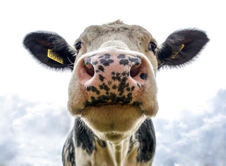 Is melk goed voor elk?