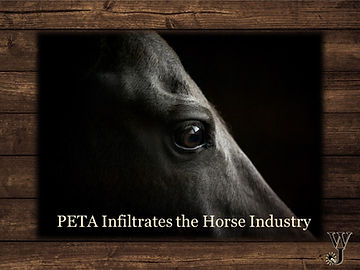 PETA infiltrates the horse industry.