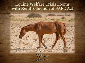 safe act reintroduction graphic 1.jpg