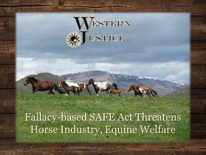 SAFE Act graphic 2 (1).jpg