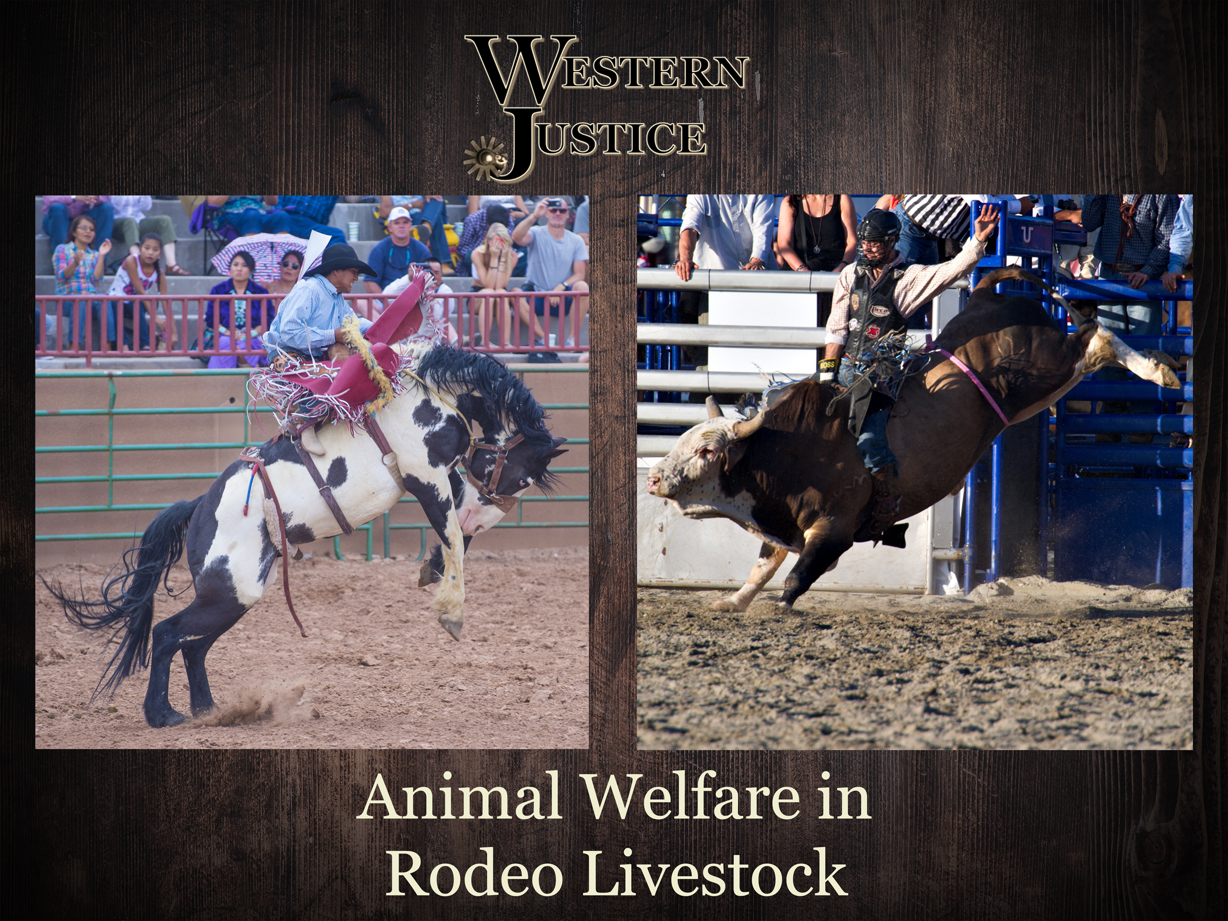 The Welfare Of Rodeo Stock