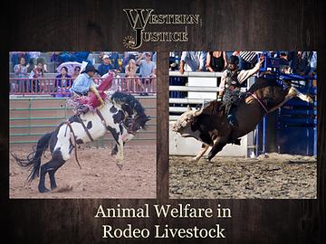 Animal Welfare In Rodeo Livestock