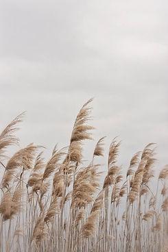 Beach Photography, Beach Grass, Wall Art