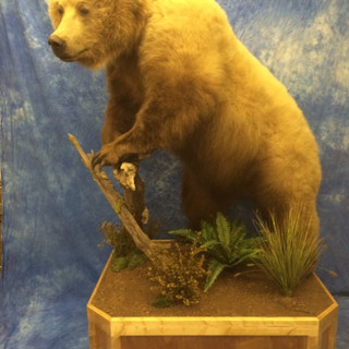 Brown Bear Lifesize