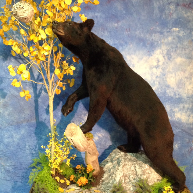 Lifesize Brown Bear