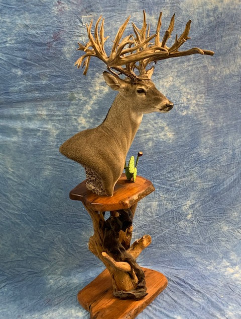 Full Pedistal Whitetail Deer w/ Mesquite