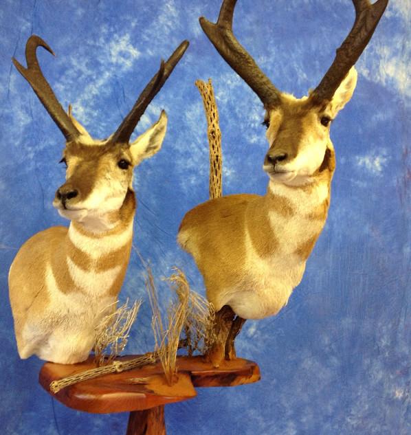 Full Pedistal Antelope