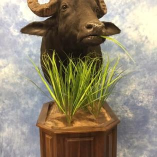 Water Buffalo Pedestal