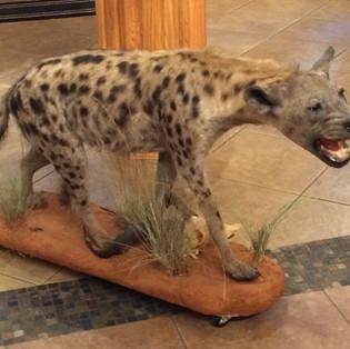 Hyena Lifesize