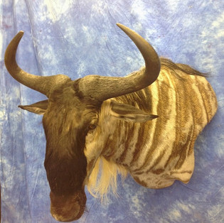 Wildebeest Wall Pedestal Left