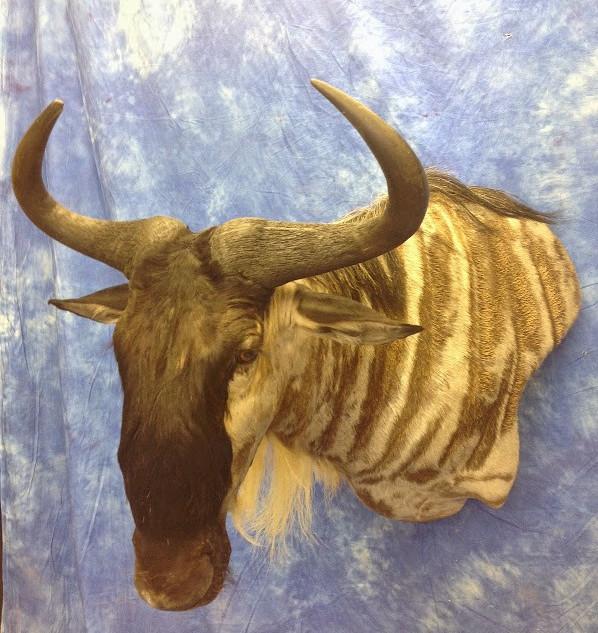 Wall Pedistal Wildebeest