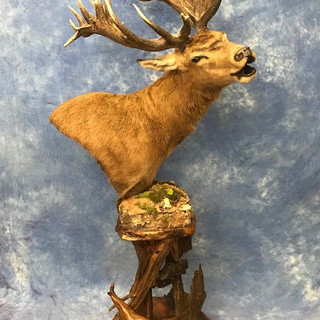 Red Stag Pedestal