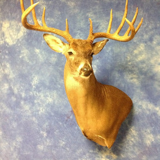 Whitetail Deer Wall Pedestal Left Turn
