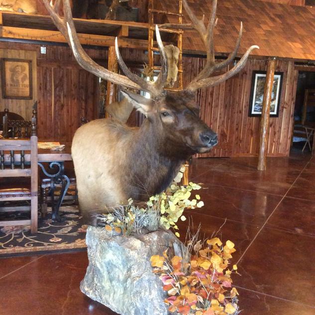 Full Pedistal Elk