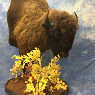 Buffalo Half Lifesize