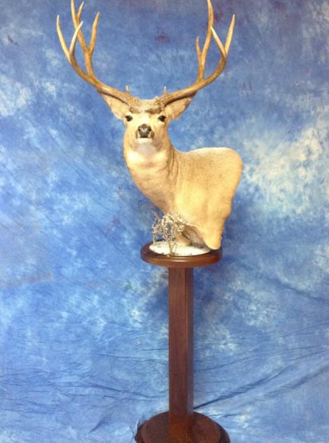 Full Pedistal Mule Deer