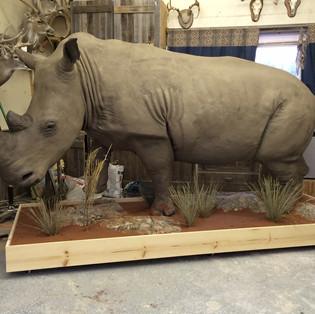 Rhinoceros Lifesize