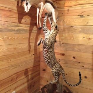 Leopard / Springbok Lifesize