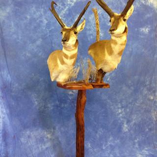Pronghorn Antelope Pedestal