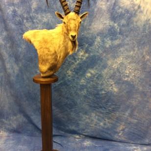 Ibex Pedestal