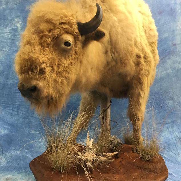 Half-Lifesize Buffalo
