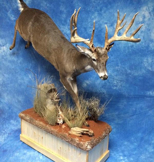 Lifesize Whitetail Deer