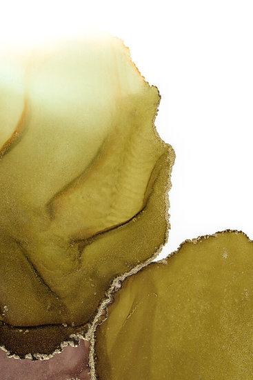 Olive I - Fine Art Print