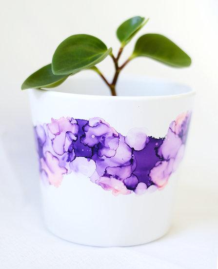 Lavender - Small Plant Pot