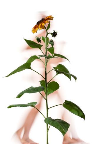 Figure/Foliage F557-1637