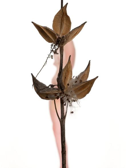Figure / Foliage