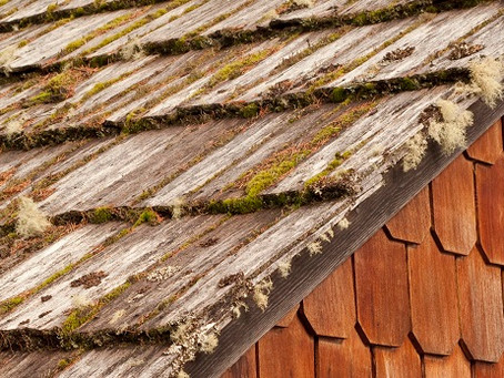 What to Do About Moss on Your Cedar Roof