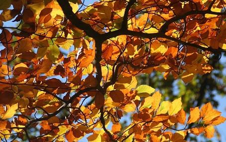 Fall Cedar Roof Maintenance Tips