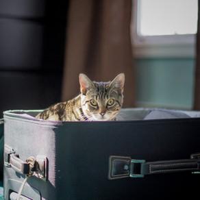 Le chat et les vacances