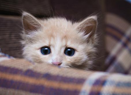 Répression des actes de cruauté envers un animal domestique