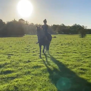 How this horse is changing my life
