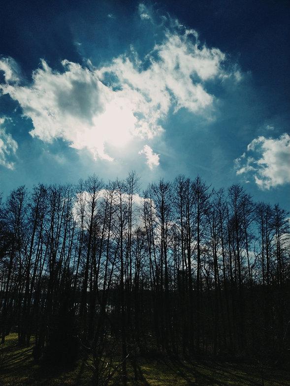 rauchholz insel usedom wald nachhaltigkeit