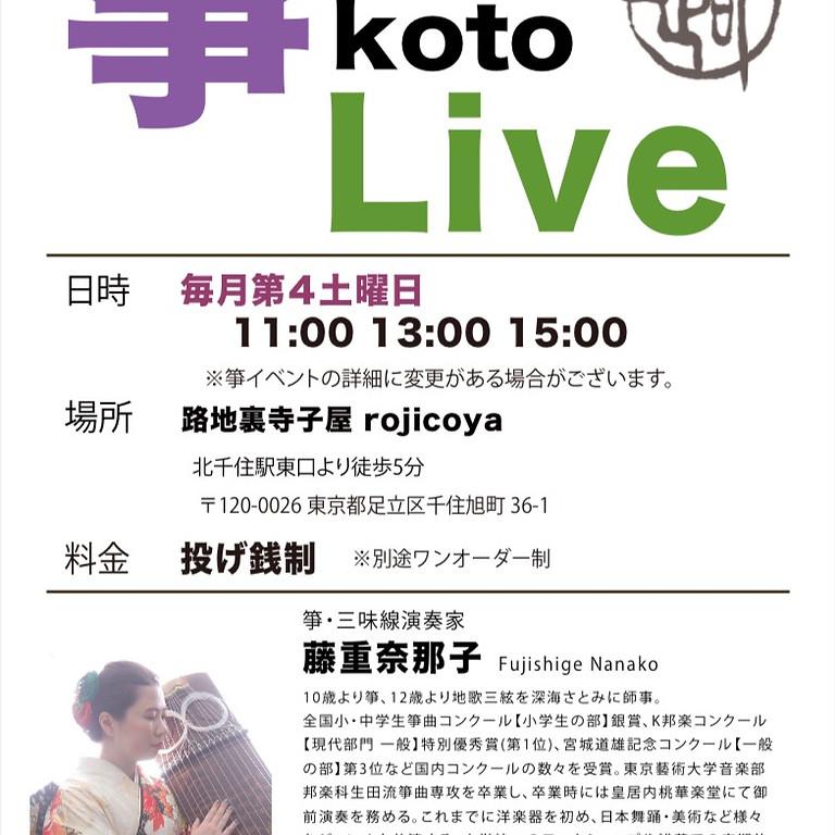 箏koto LIVE