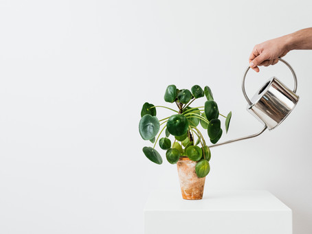 How To Stay Planted With God