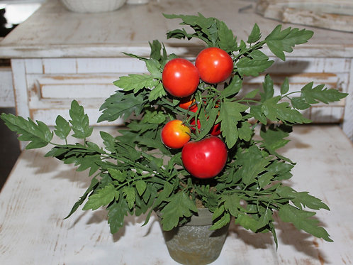16 Inch Potted Tomato Plant