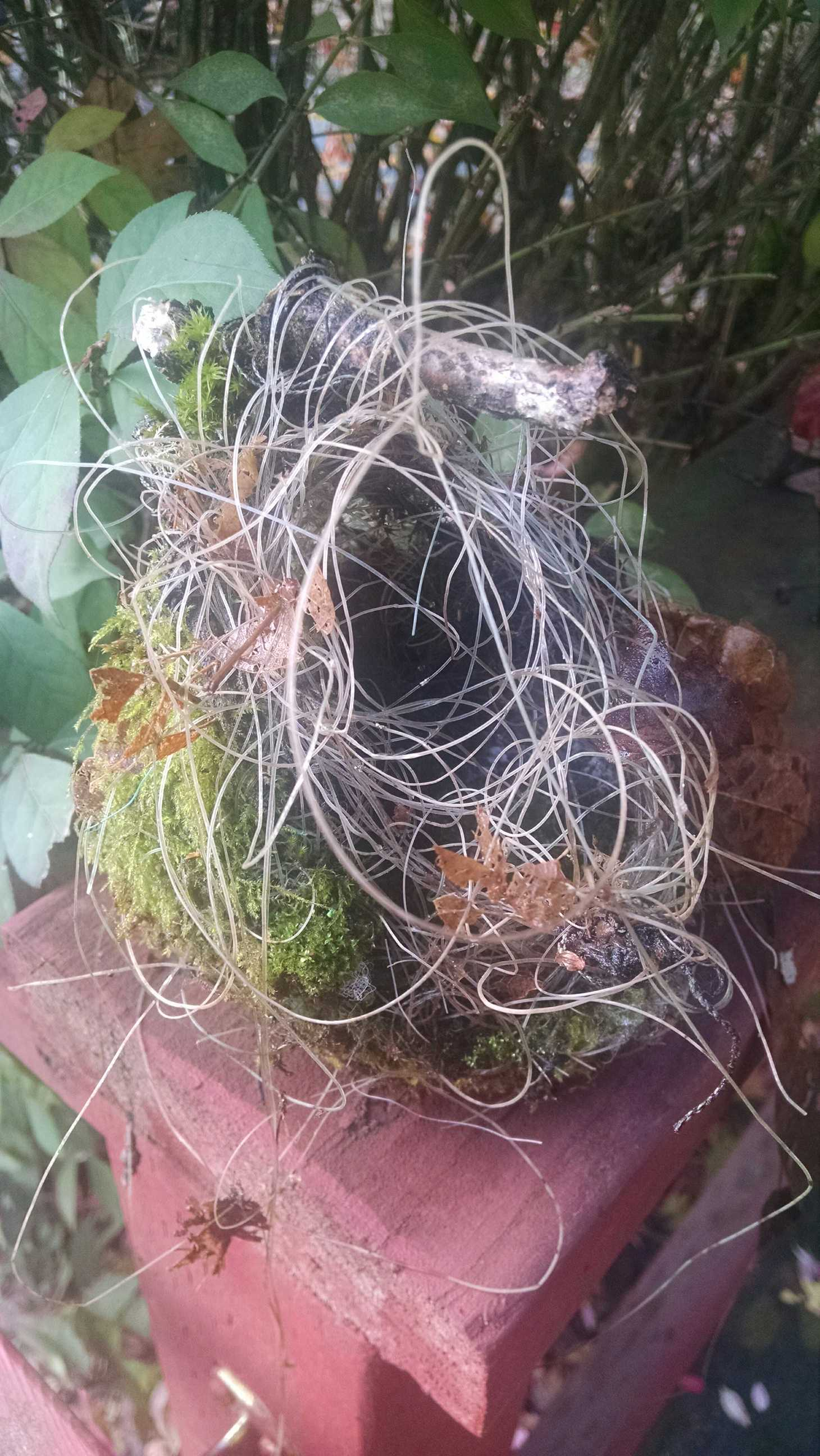 Hummingbird nest of fishing line