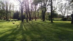 Oak Groves for open tenting