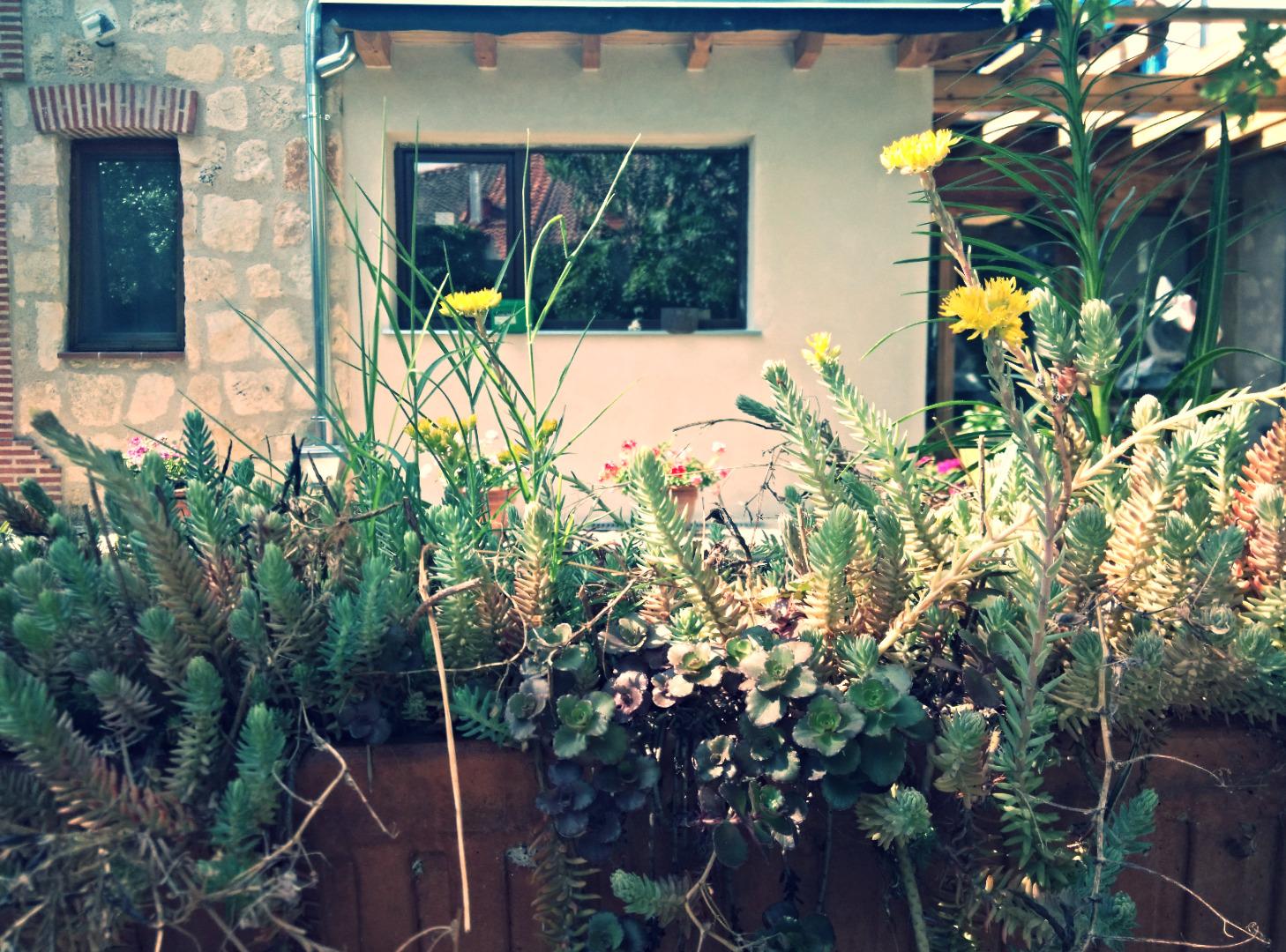 Desde el jardín